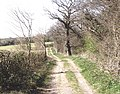North Downs Way across top of Brabourne Downs - geograph.org.uk - 392069.jpg