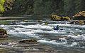 North Umpqua Wild and Scenic River (19891213025).jpg