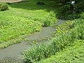 Nouans ruisseau Saint-Martin.jpg