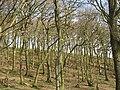 Oakwoods above Dolderwen - geograph.org.uk - 750397.jpg