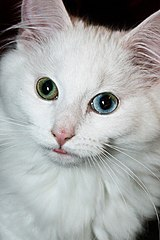 Can Ferrel Cats Spread Disease To Dogs