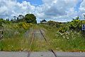 Old Railway Line to Rotorua (32115861976).jpg