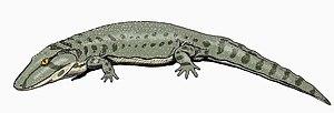 Eryopidae - Image: Onchiodon 12DB