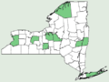 Onopordum acanthium NY-dist-map.png
