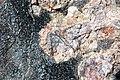 Opal in hydrothermally-altered rhyolitic obsidian (Tertiary; mine at Opal Mountain, Clark County, Idaho, USA) 4.jpg
