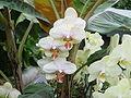 Orchid1867.JPG