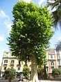 Orto botanico di Napoli 202.JPG