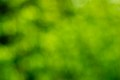 Out of Focus Green Backgounds-18.jpg