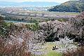 Oyamazaki Kyoto01-r.jpg