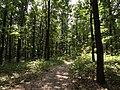 Přírodní park Škvorecká obora-Králičina - lesy východně od sídliště Rohožník a severně od Květnické studánky (6).JPG