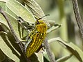 P1670533 Όμορφο έντομο 1.jpg