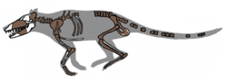 Pakicetus fossil.png