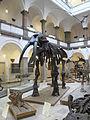 Paläontologisches Museum Munich 1.JPG