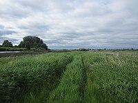 Palkinsky District, Pskov Oblast, Russia - panoramio (75).jpg