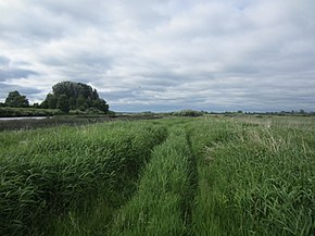 Palkinsky District, Pskov Oblast, Russia - panoramio (75).jpg