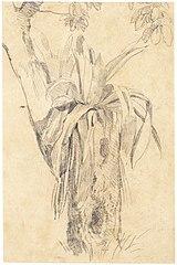 Parasitical Plant