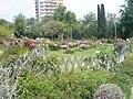 Parc de cervantes - roses.JPG