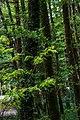 Parco naturale regionale delle Serre 19.jpg