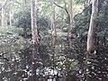 Parmadan Forest 13.jpg