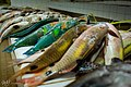 Parrot Fish (105664879).jpeg