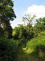 Path in Middle Wood - geograph.org.uk - 25985.jpg