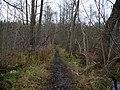 Path in the Teufelsbruch swamp 2.jpg