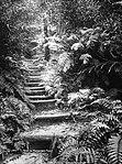 Path to Katoomba Falls (4903859224).jpg