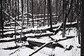 Pattern Of Logs (206203761).jpeg