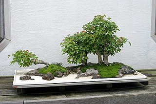 art of creating tray landscapes that combine miniature living trees with soil, rocks, water, and related vegetation (like ground cover) in a single tray or similar container