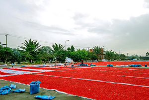 Bird's eye chili - Commercial-scale drying of chilis in Vietnam.