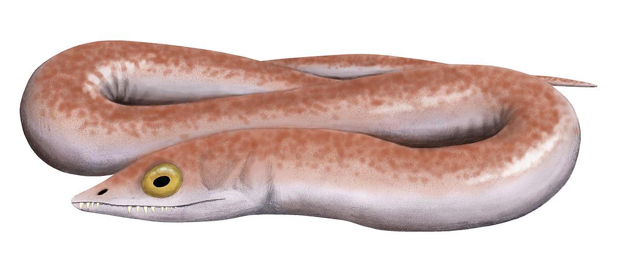 Lepospondyls