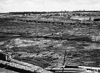 Photograph of Logs in Flambeau River - NARA - 2128655.jpg