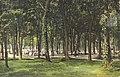 Picnic Grove (13959922239).jpg