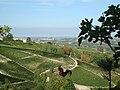 Piemont Calosso - panoramio.jpg