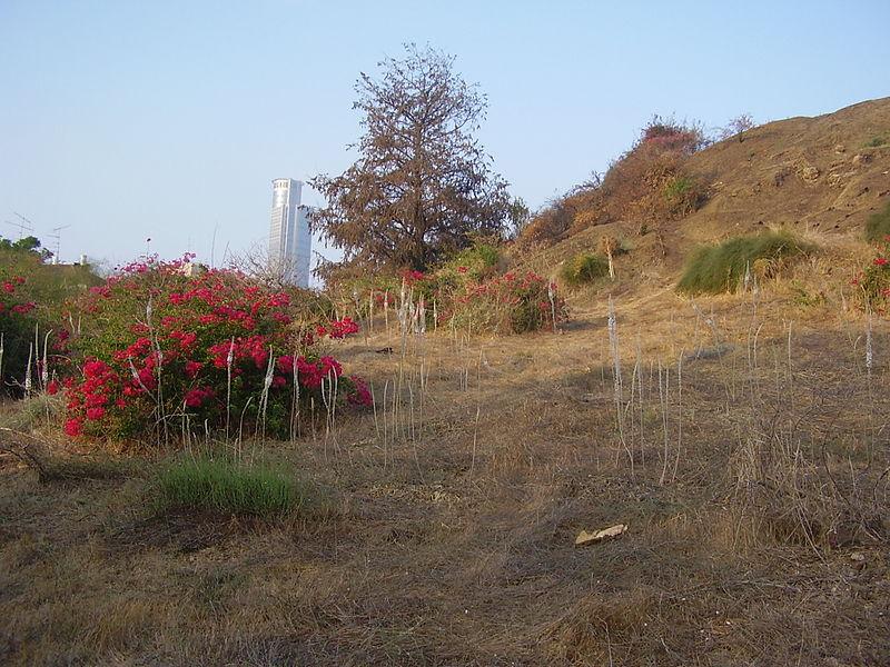 חצבים בתל נפוליאון ליד רמת גן
