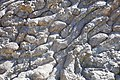 Pillow Lava at Wadi Jizzi in Oman.jpg