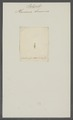 Planaria brunnea - - Print - Iconographia Zoologica - Special Collections University of Amsterdam - UBAINV0274 105 09 0032.tif