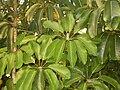 Planta de Cancun.JPG