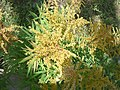 Plantes dans la grande orangeraie 2.JPG