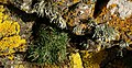 Plantlife on rocks near Kelly's Cove - geograph.org.uk - 1169095.jpg