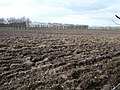 Ploughed orchard - geograph.org.uk - 350547.jpg