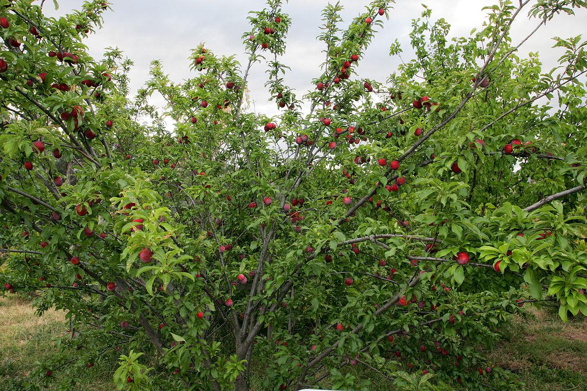 Whole Food Blackberry Fruit Spread Ebay