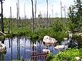 Pond - panoramio - TFox.jpg
