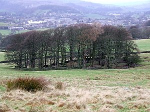 Craven - Woodland, for it to endure, must be enclosed to protect its re-growth from grazing