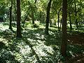 Por los jardines del Campo del Moro.jpg