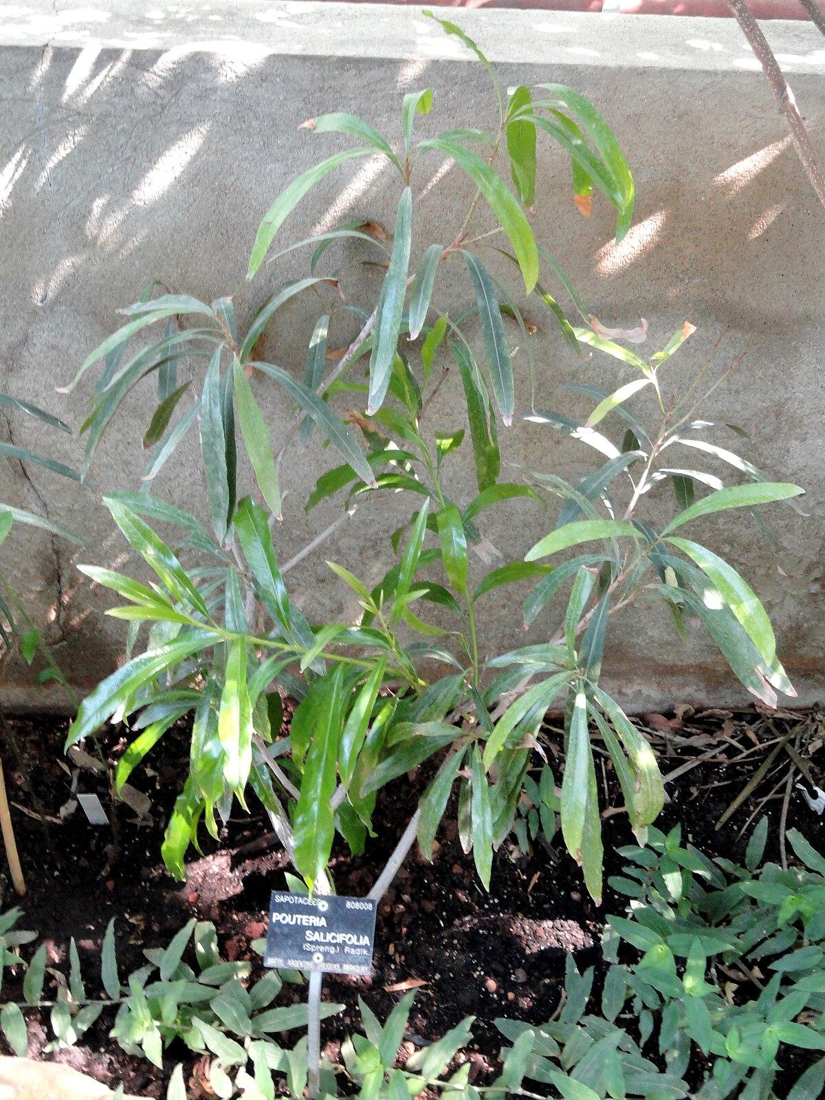 Aguay wiktionnaire for Jardin wiktionnaire