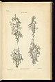 Print, Gerandoles, 1755 (CH 18282665).jpg