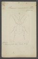 Procerus - Print - Iconographia Zoologica - Special Collections University of Amsterdam - UBAINV0274 009 06 0003.tif