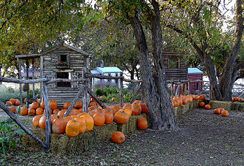 English: An image of pumpkins in a Texas setting.
