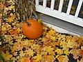 Pumpkin in autumn.jpg